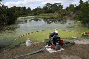 Duckweed Pond and Diaphragm Pump