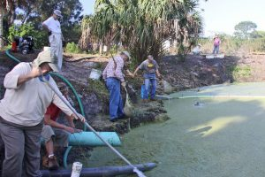 Volunteers removing Duckweed