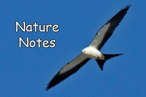 Nature_Notes