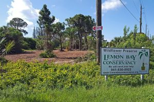 The northwest corner of Wildflower Preserve with invasive clearing in progress.