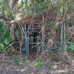 Old well pump house overrun by vegetation