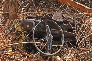 The rusted out remains of an old golf cart uncovered during removal of invasive vegetation.
