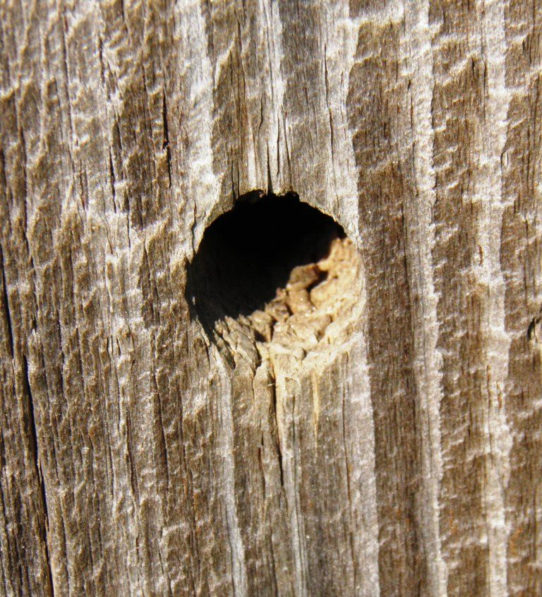 the wood cutter bee