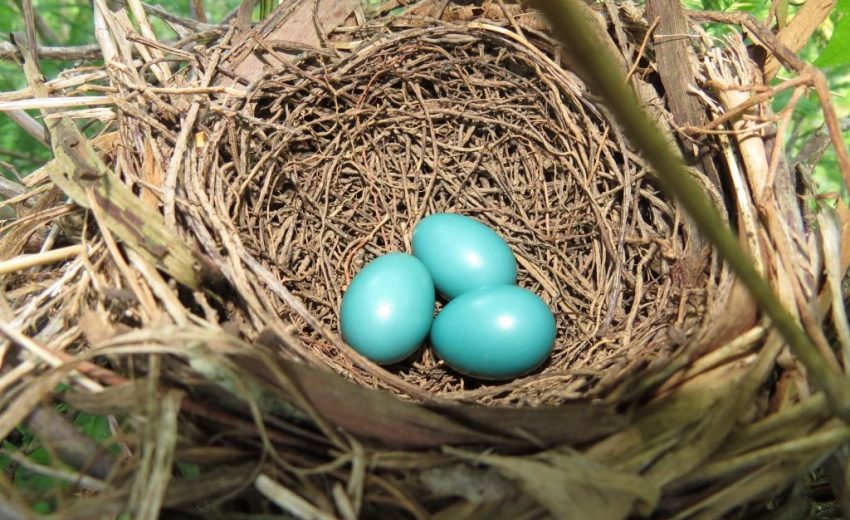 Egg Traordinary Bird Nests Lemon Bay Conservancy